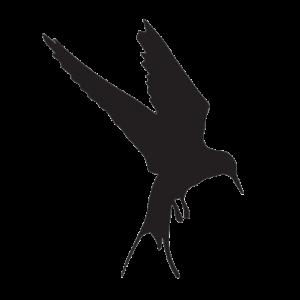 cropped-Logo-Noir-transparent